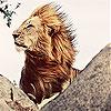 Big king lion slide puzzle