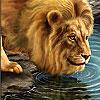 Big thirsty lion slide puzzle