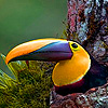 Colored beak in the mountain puzzle