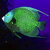 Deep green fish puzzle
