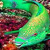Green fluorescent fish puzzle