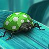 Green ladybug puzzle