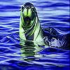 Green sea lion slide puzzle
