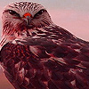 Hawks in mountain puzzle