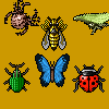 Insect Crush