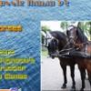 Puzzle Mania v2 - Horses