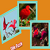 Scarlet ibis in the tropic island puzzle