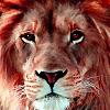 Wild lion face puzzle