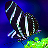 Zebra butterflies in the jungle puzzle